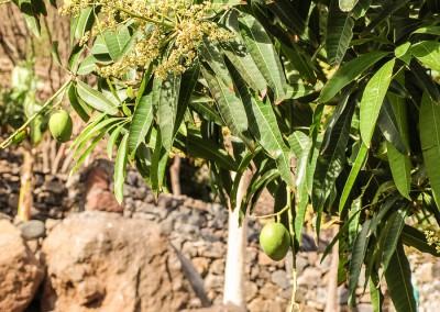 Casa no Caminho Haus am Weg Santo Antao Kapverden Capo Verde